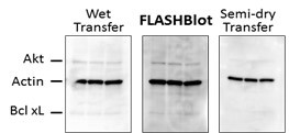 FLASHBlot Wet Transfer